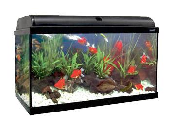 Ica Aqualight 25 Litros Tarraco Goldfish Tienda Online